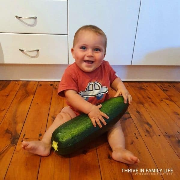 8 month old Montessori baby in red shirt sitting on wooden floor holding large zucchini